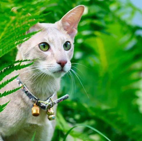 El cascabel puede dañar el oído del gato